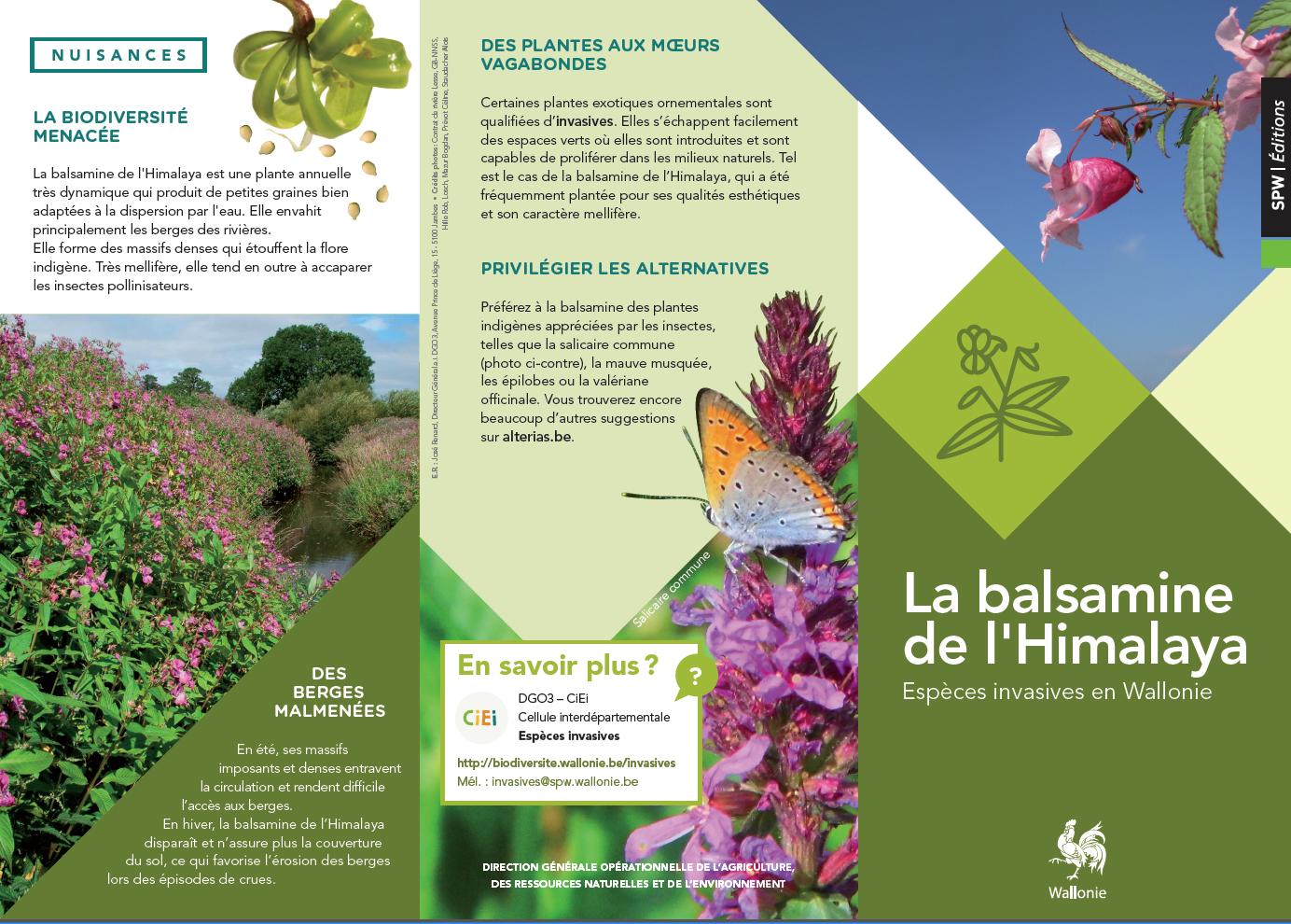 La balsamine de l'Himalaya : Espèces invasives en Wallonie